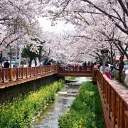 Musim Semi, Saat Terbaik nan Romantis Kalau Mau ke Korea