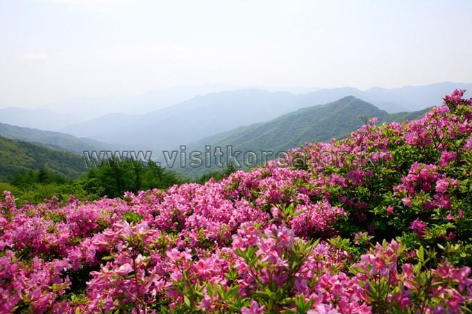 the Whole of Daegu