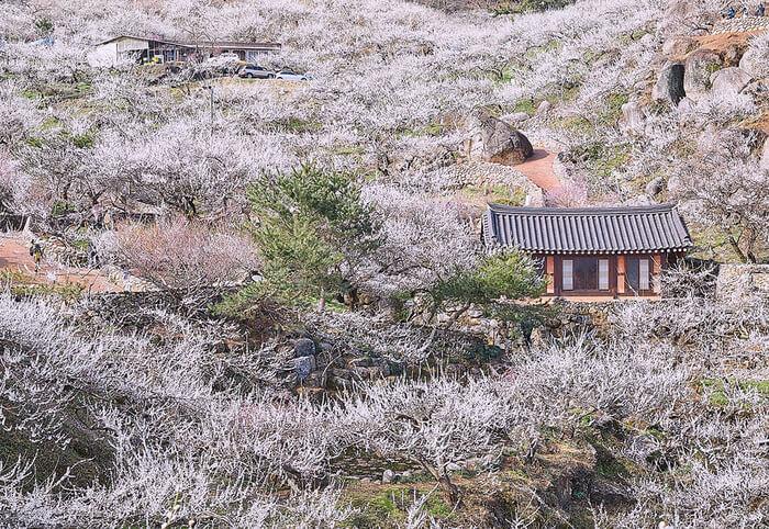 Keindahan Musim Semi di Jeollanam-do