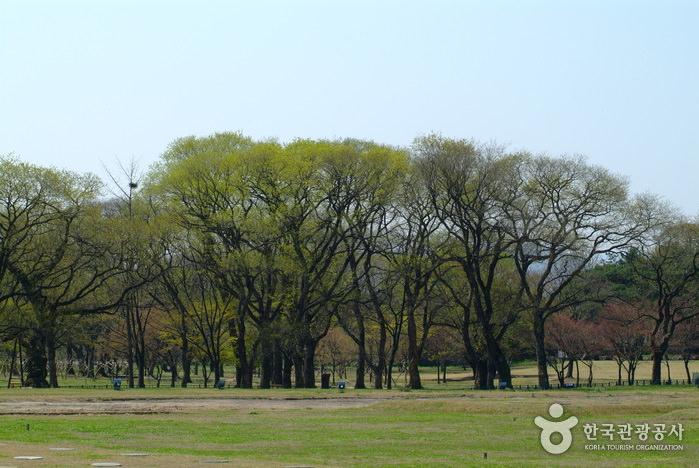Hutan Gyerim Gyeongju
