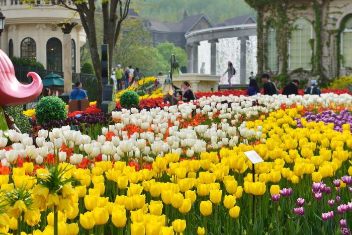 Festival Tulip Everland