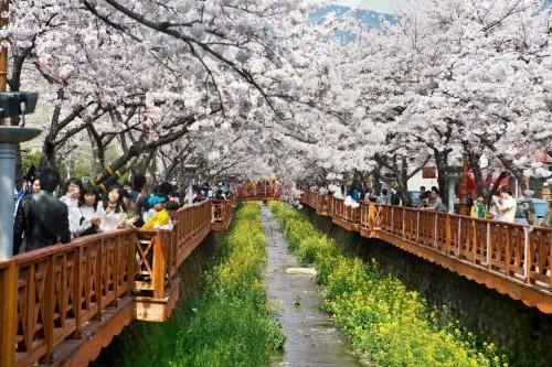Festival Gunhangje Jinhae
