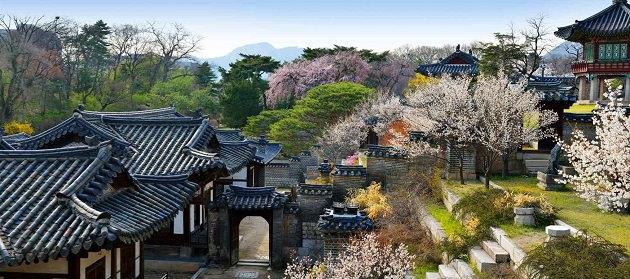[Korea] Menikmati Mekarnya Bunga Musim Semi di Istana Tradisional