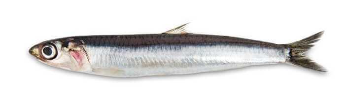 Teri, Ikan Sederhana nan Lezat Khas Musim Semi Korea