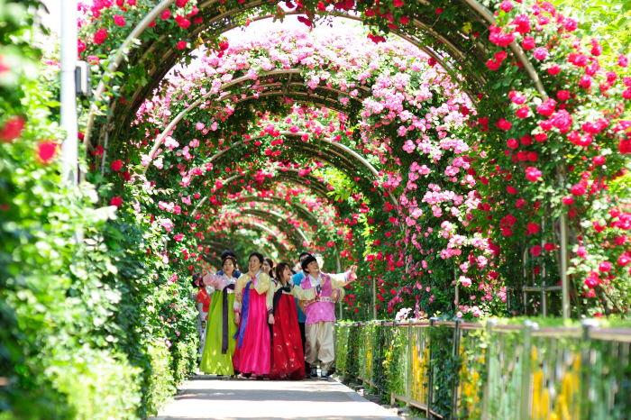 Festival Bunga Mawar Seoul