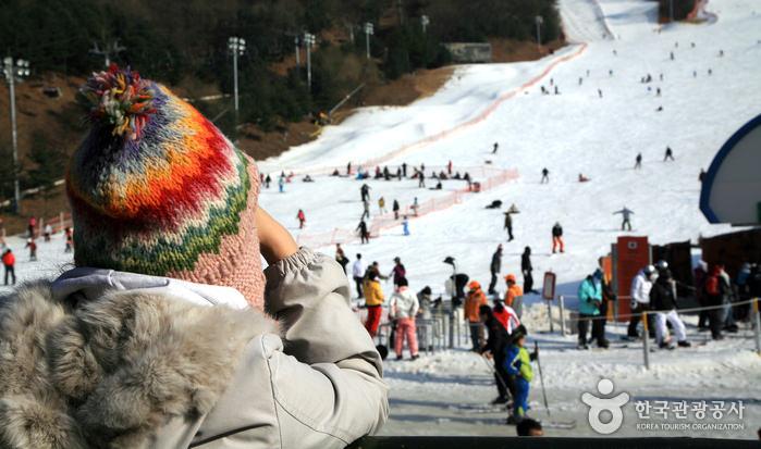 Resort Yangji Pine Lembah Ski