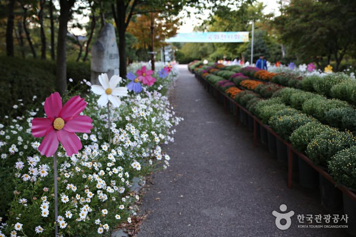 Taman Bunga Provinsi Gangwon-do
