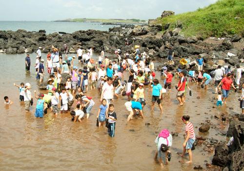 Festival Dodu Oraemul