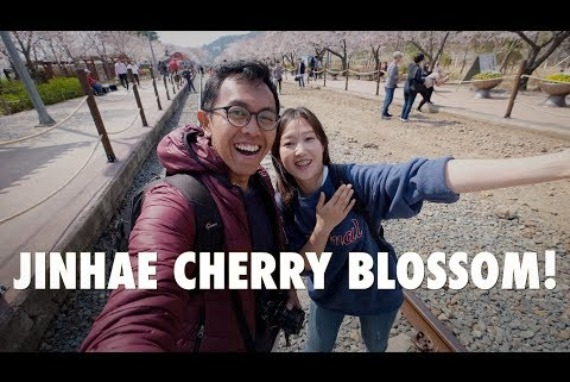 JINHAE : BEST CHERRY BLOSSOM SPOT IN KOREA!