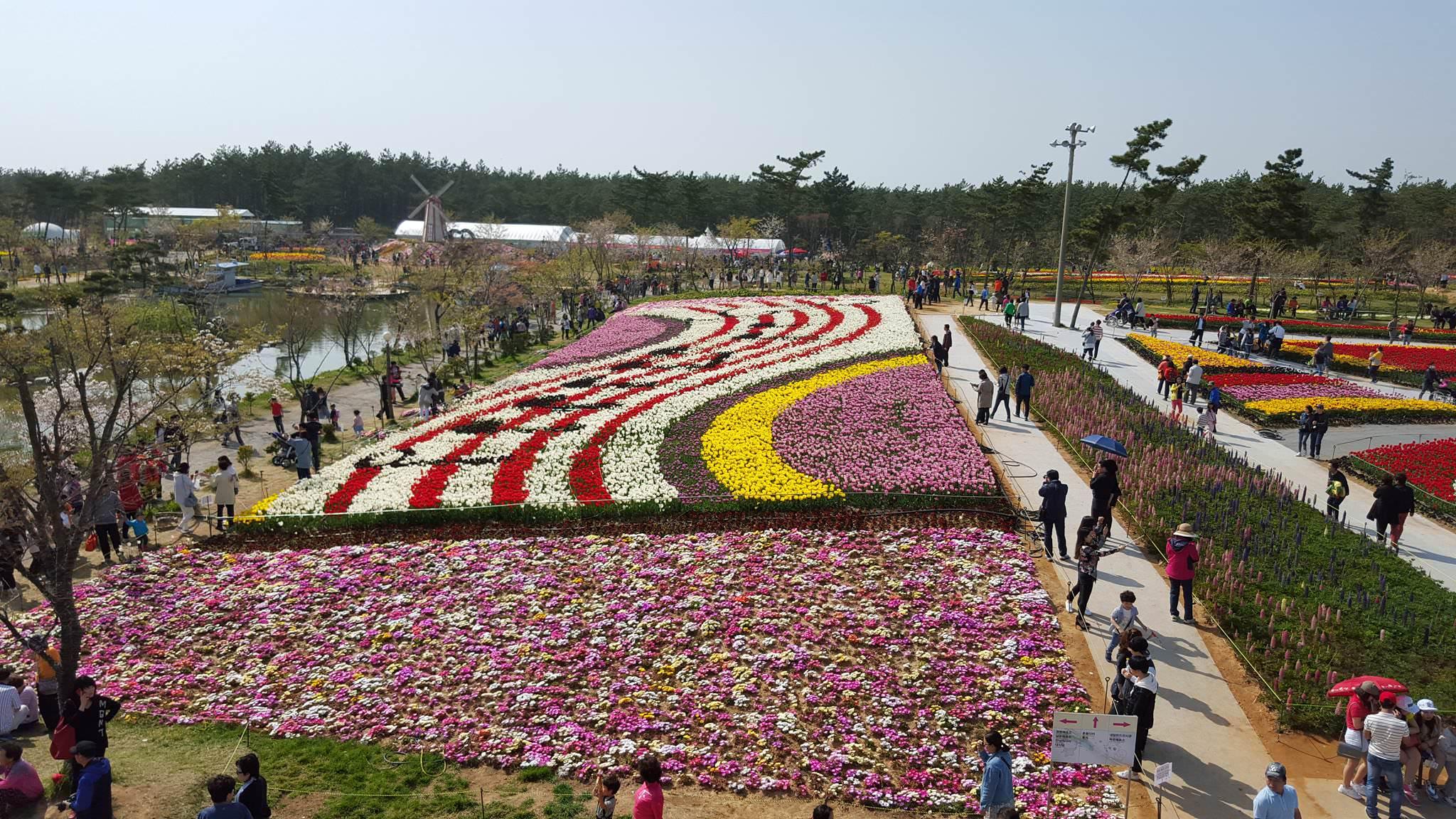 Festival Bunga dan Festival Cahaya Taean