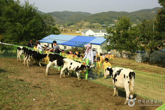 Imsil Cheese Village