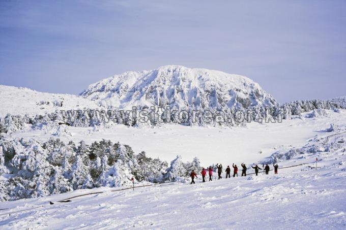 Mt. Hallasan Olle Trail
