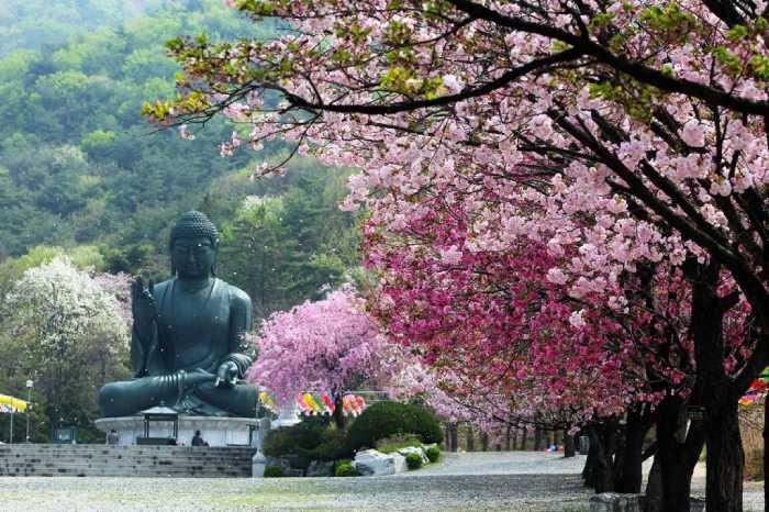 Ada Apa di Chungnam-do, Korea Selatan?