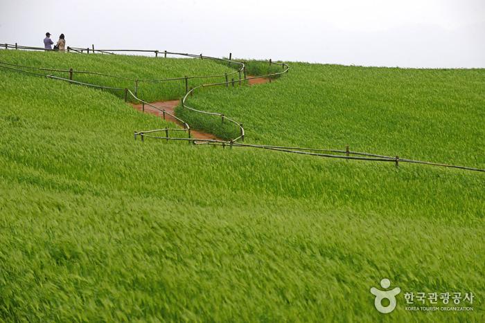 Perkebunan Borinara Hagwon