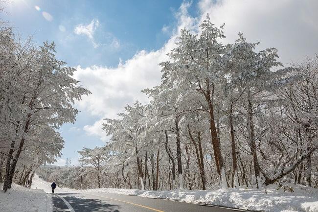 Rute Tambahan untuk Bus Salju Hallasan Jeju
