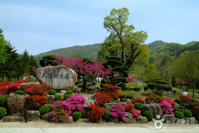 Daea Arboretum