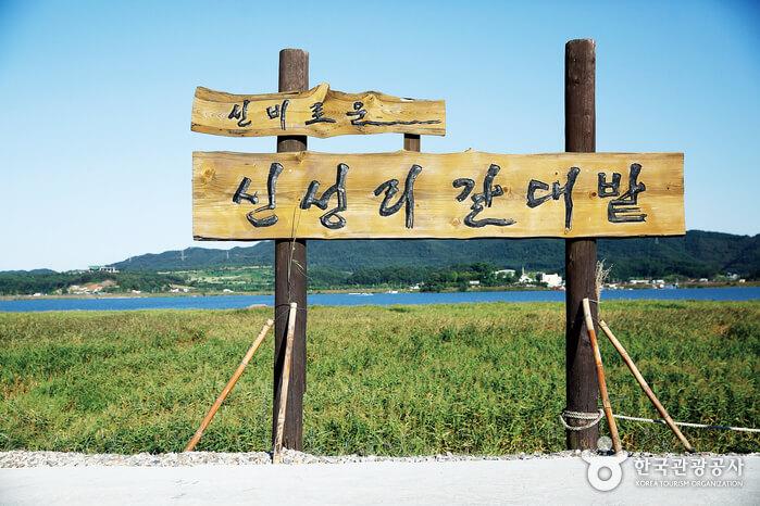 Padang Ilalang Sinseong-ri (신성리 갈대밭)
