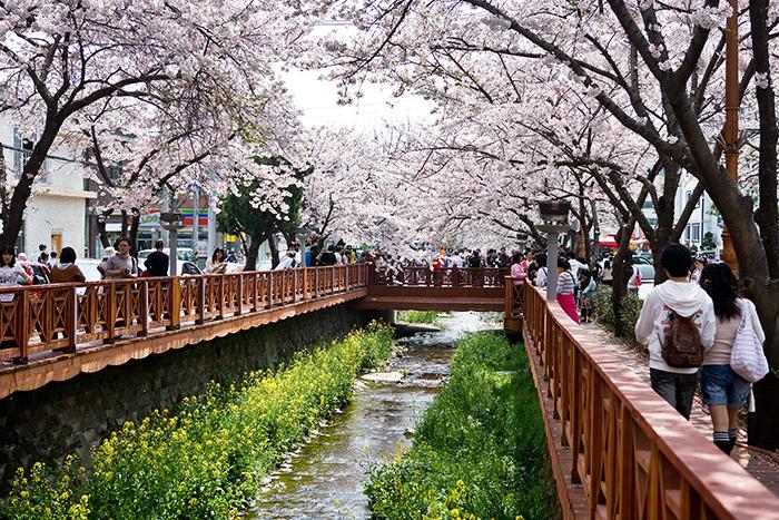 Destinasi Wisata di Gyeongnam yang Harus masuk Bucket List 2019