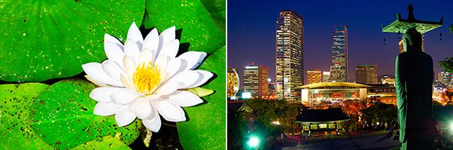 Kunjungan ke Kuil Bongeunsa dengan Aroma Bunga Teratai!