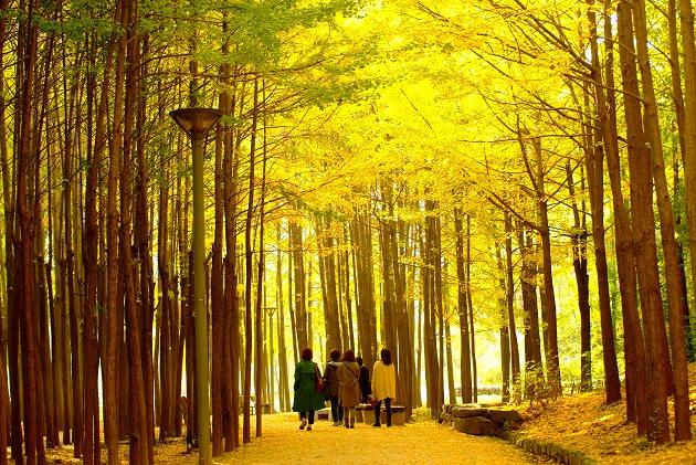 Rute Jalan Kaki Musim Gugur yang Direkomendasikan saat Berkunjung ke Seoul