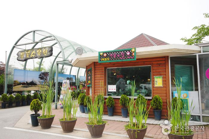 Arboretum Bunga Liar Yangpyeong