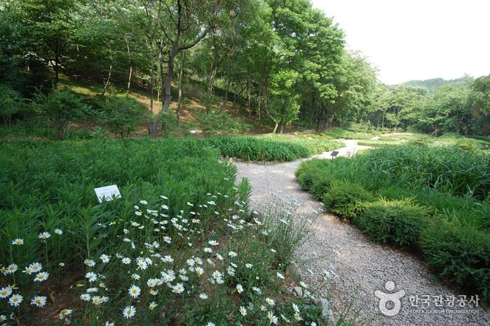 Arboretum Kwanak di Universitas Nasional Seoul