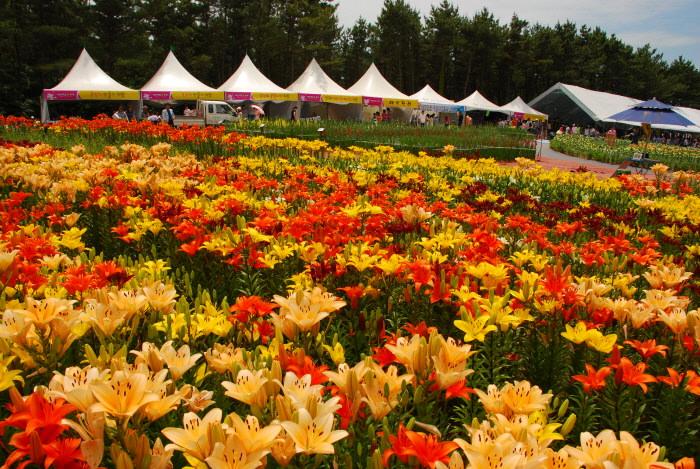 Festival F Taean