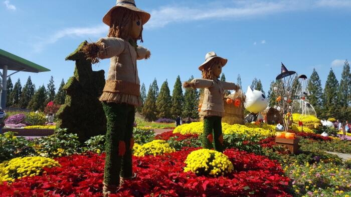 Festival Bunga Musim Gugur Goyang (고양가을꽃축제)