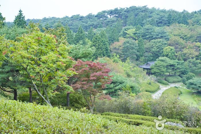 Hutan Rekreasi Pulau Anmyeondo