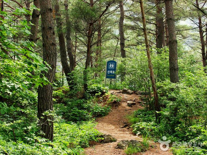 Lembah Molundae (Jeongseon)