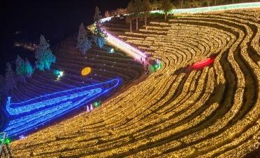 Cahaya Menghiasi Festival Cahaya Perkebunan Teh Boseong