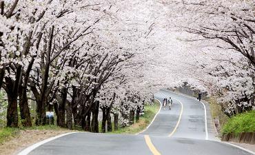Panduan Festival Musim Semi (Maret – Mei)