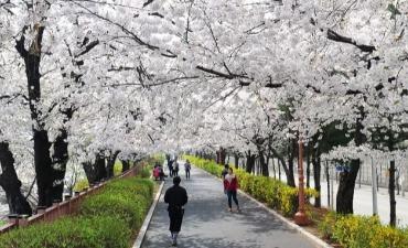 Festival Spring Blossom Dongdaemun (동대문 봄꽃축제)