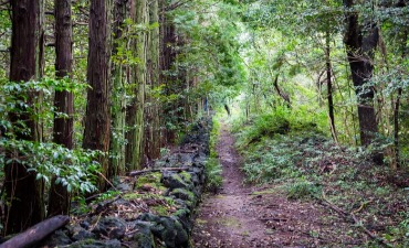 Jalur Hutan Gosalli (고살리 숲길)