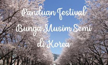 FESTIVAL BUNGA MUSIM SEMI KOREA