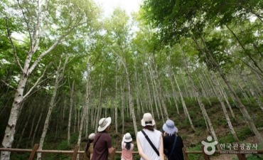 National Center for Forest Therapy, Gimcheon