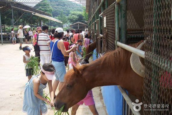 Peternakan Kuda Poni Hanteo