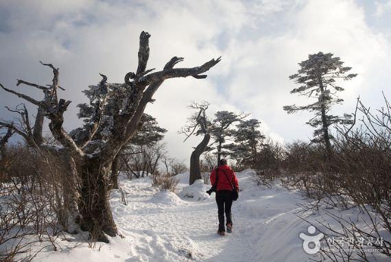 Festival Gunung Salju Taebaeksan