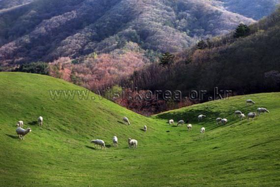 Spring of Daegwalleong