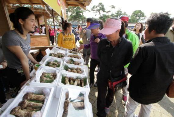 Festival Jamur Geumgang Songi Uljin