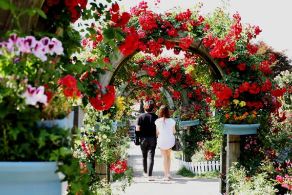 Festival Bunga Mawar Seoul Grand Park