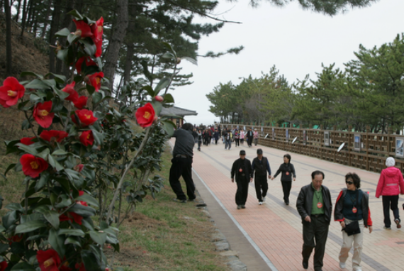 Festival Bunga Kamelia & Gurita Seocheon