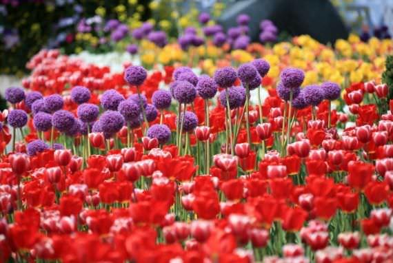 Pameran Bunga Internasional Goyang Korea