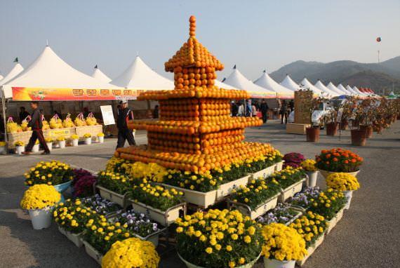 Festival Buah Persimmon Manis Gimhae Jinyeong