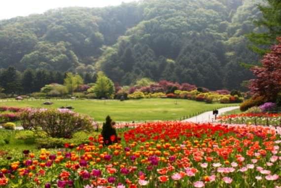Festival Musim Semi di The Garden of Morning Calm
