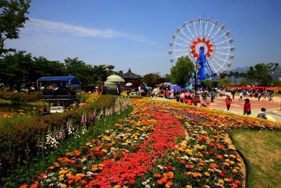 Festival Internasional Mawar Gokseong