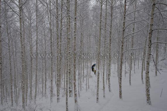 White birth Forest