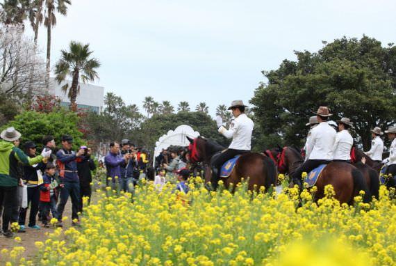 Festival Jalan-Jalan Internasional Bunga Seogwipo Yuchae (Canola)