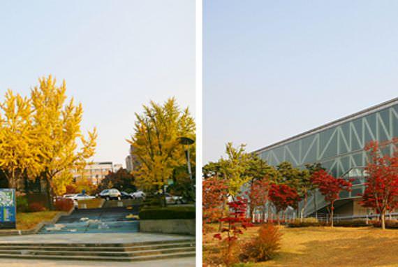 Berjalan santai melalui Nakseongdae Garosu-gil Road