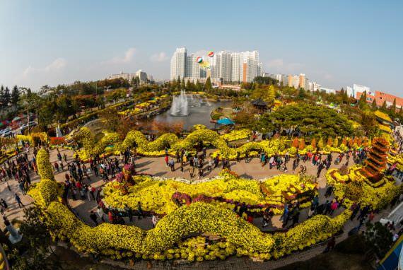 Festival Sepuluh Juta Bunga Krisan (Chrysanthemum) Iksan